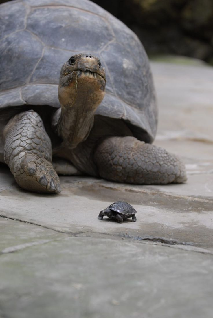 Best Environment Climate And Wildlife Images On Pinterest - Jonathan tortoise mind blowing 182 years old