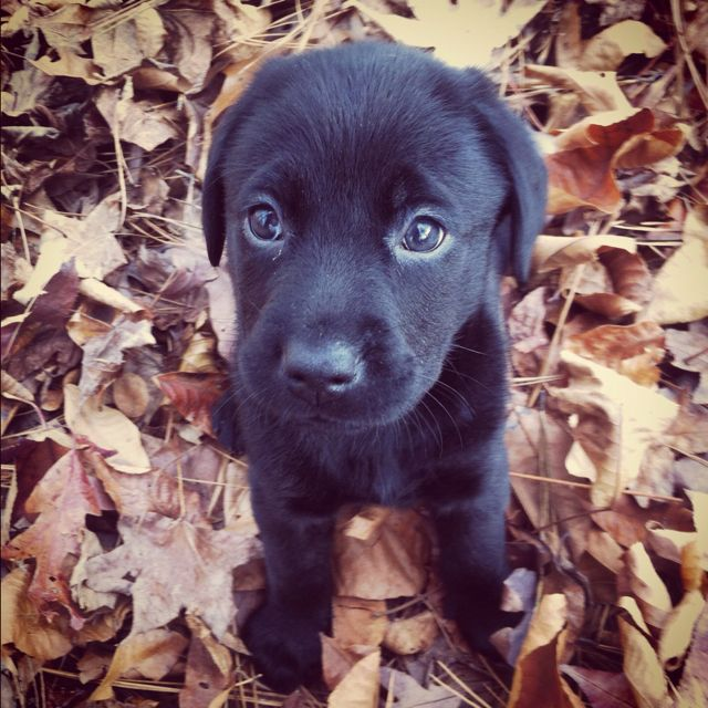 My black lab :)