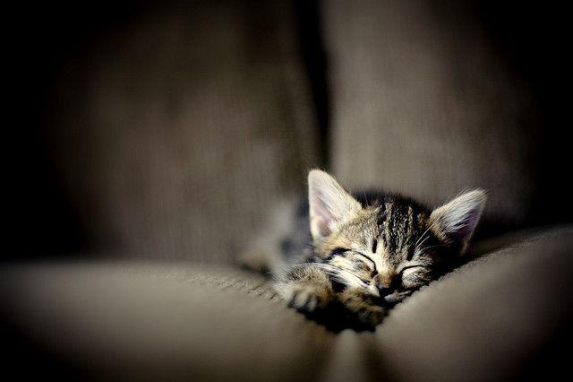: Kitty Cat, Sleepy Kitty, Baby Kittens, Cat Naps, Baby Animal, Naps Time, Baby Dogs, Sleep Time, Baby Cat