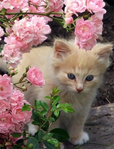 See more Cute little kitty in a flower garden
