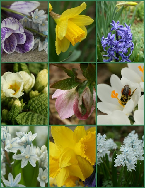 Spring will be here soon...: Spring Flowers, Flowers Power, Favourit Flowers