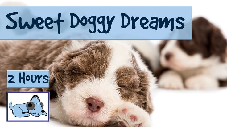 2.5 HOURS of Sweet Doggy Dreams Music. Send your Dog to Sleep with this ...