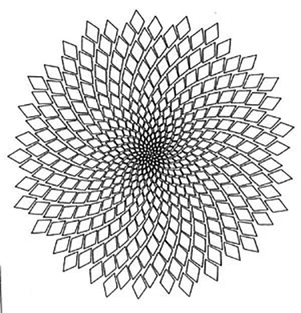 SunFlower-SpiralSeedTorus