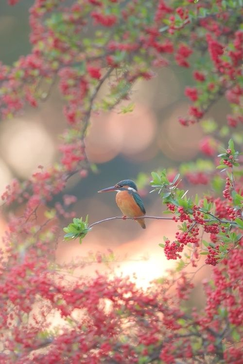 Beautiful bird in spring