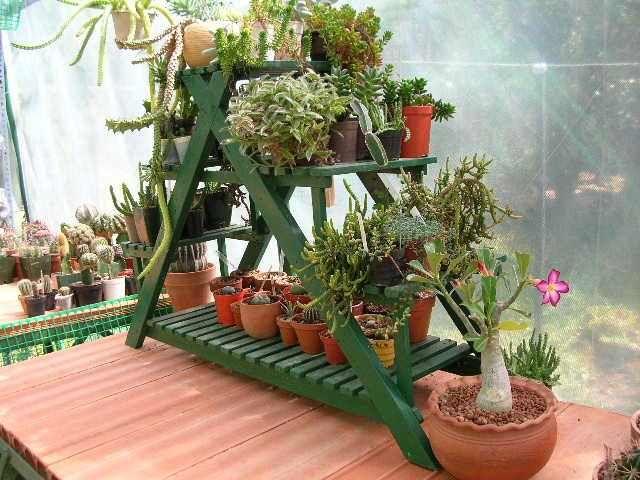 1000 ideas about plantas colgantes de sol on pinterest for Plantas colgantes exterior sol