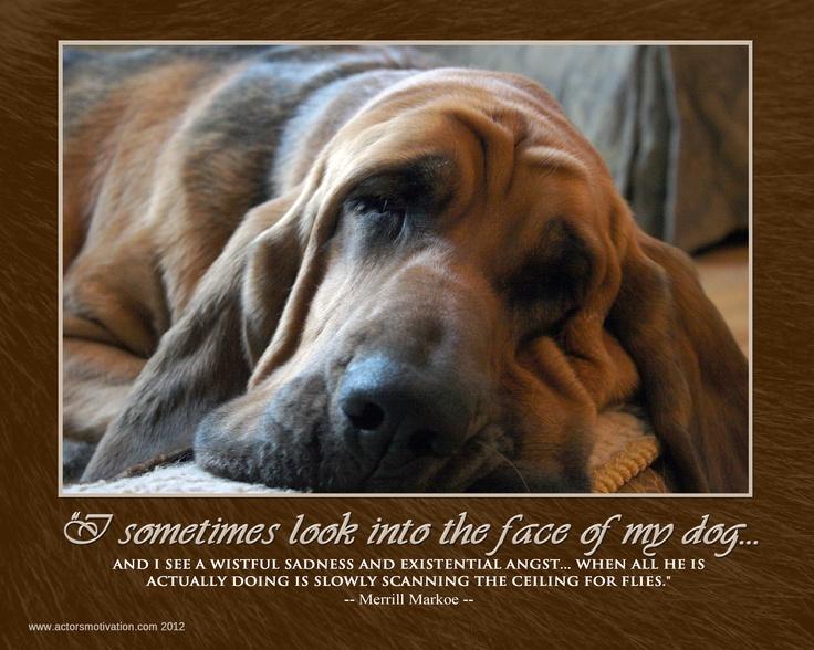 A Bloodhound To Die For Die besten 25+ ...