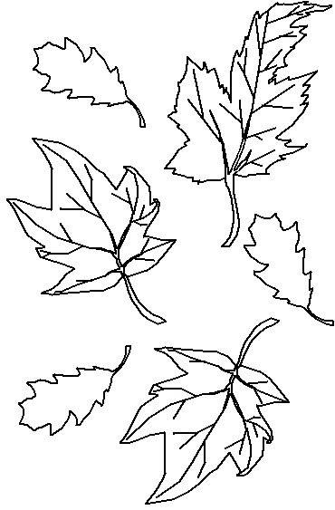 1000 images about Line Drawings TreesLeaves on