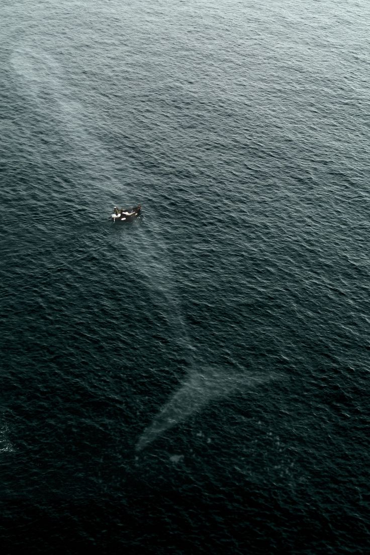 Blue Whale swimming just below the surface of a small boat...amazing!