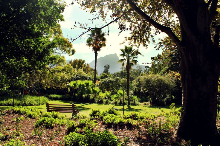 Spend the afternoon soaking up the warm rays and admiring the majestic mountain in the beautiful Arderne Gardens.