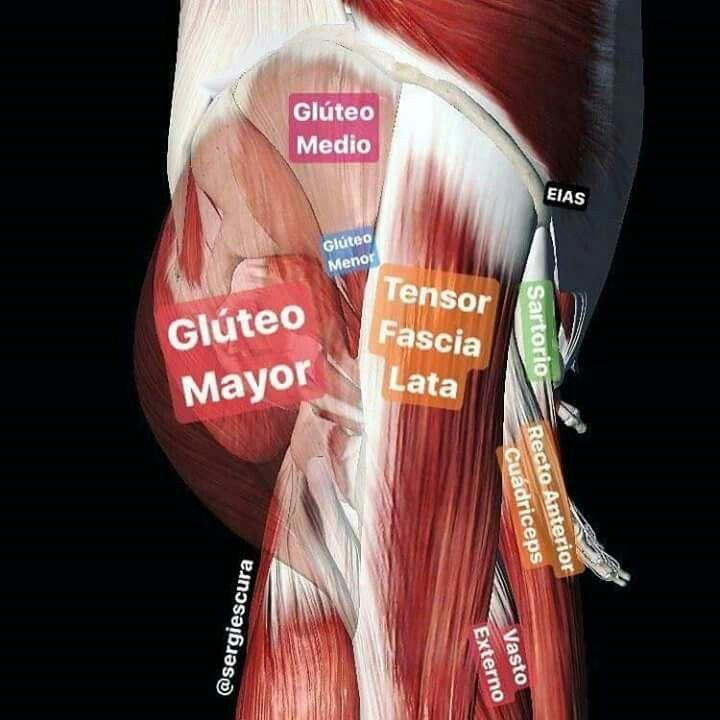 Las mejores 62 imágenes de Anatomia, Fisiología, Biología de ...