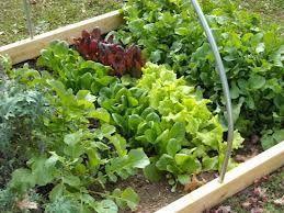Relaks, Ruch Na świeżym Powietrzu, Hobby. Winter Garden, Organic Gardening  ...