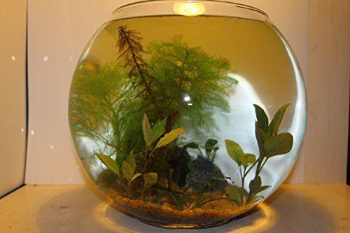 Minibiotop - mini Aquarium - Wabi Kusa - Goldfischglas 23cm, Komplett Set Mittel, XXL Wasserpflanzenpaket + Bodengrund + echten Halbedelsteinen