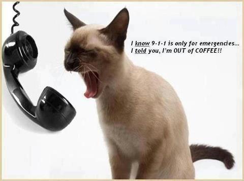 Definitely an emergency ...Siam Cat, Cat Coffe, Animal Humor, Funny Cat, Plain Funny, Funny Stuff, Coffee Helpful, Coffe 911, 911 Coffe