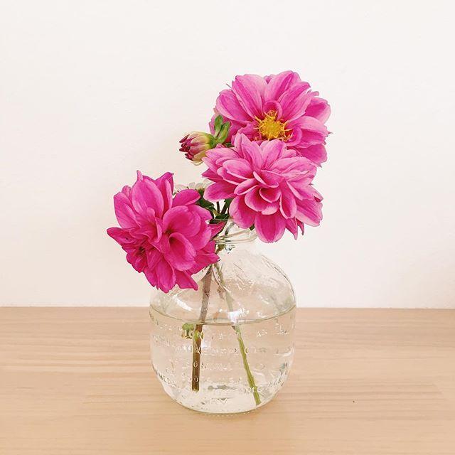 2016.10.19(水) ・ 昨日長女が、久しぶりにおじいちゃんのお庭でお花を摘んできてくれました。 ・ ・ #pyokopyokopおみやげ #子ども #3歳 #お花 #おみやげ #日々 #産休 #産休中 #マルティネリ #マルティネリの空瓶