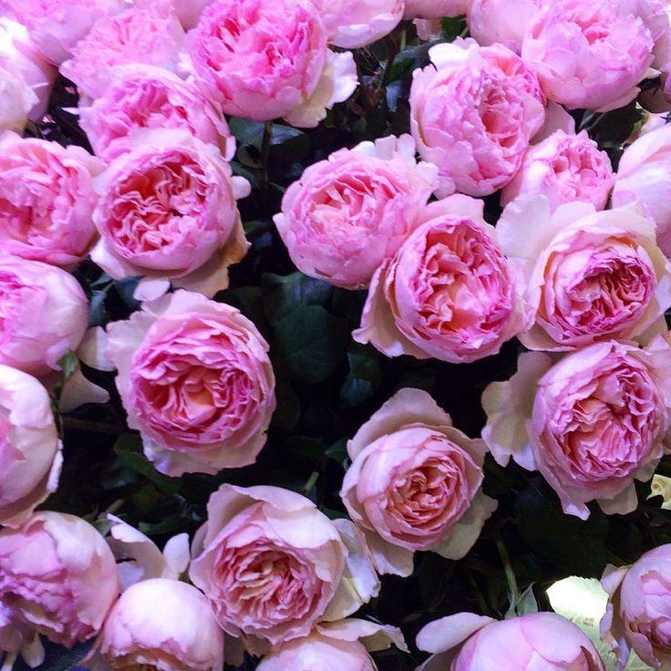 Na dzień matki najlepsze są kwiatki✨����#roses#onlyroses#flowers#flowerbomb#flowerdiary#flowerpower#dzienmatki#kwiatkinadzienmatki#rosen#róże#pinktouch#piękneróże#mockwiatów#kwiaty#blumen#rose#wildflowers#wildroses#flowerporn#flowerslovers#polishgirl#polskadziewczyna#daily#instagood#instamood#l4l# http://gelinshop.com/ipost/1523102895581484555/?code=BUjJgOHgNYL