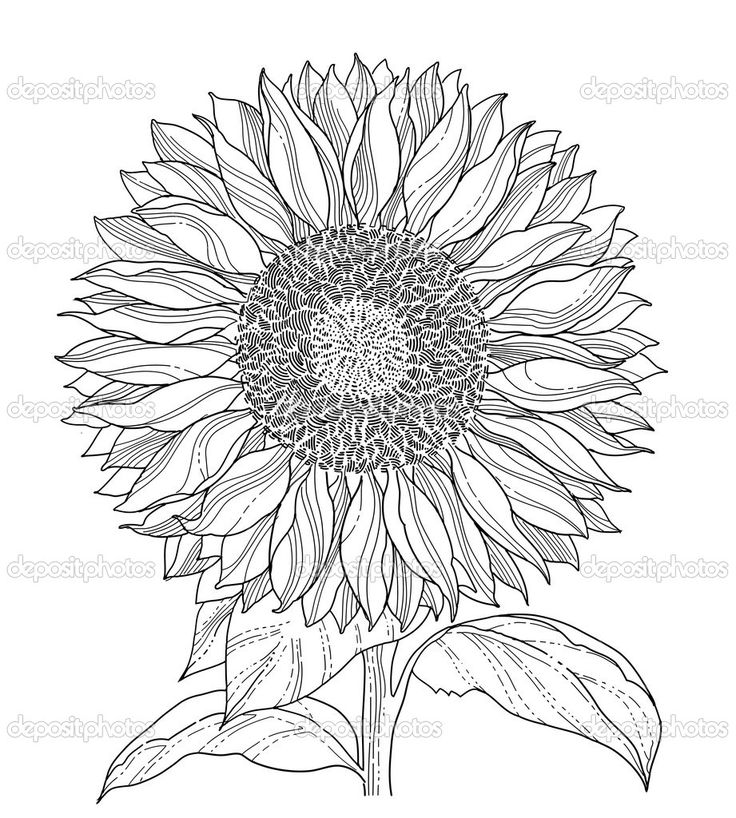 Line Drawing Sunflower Tattoo : Best flower line drawings images on pinterest