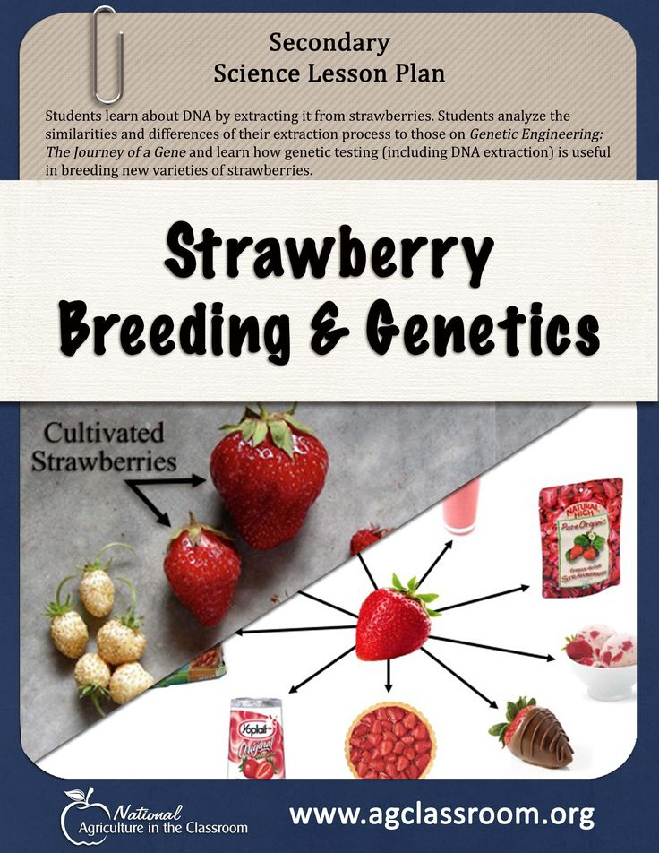 Excessive Faculty science lesson plan the place college students extract DNA from strawberries and…