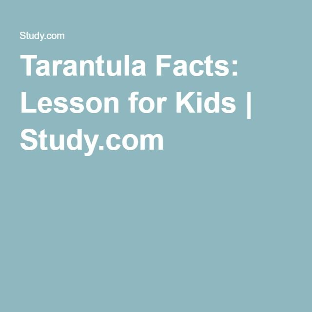 Tarantula Facts: Lesson for Kids | Study.com