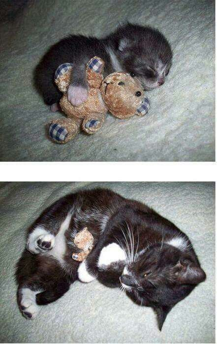 Growing up doesn't mean you can't hug your teddy bear.
