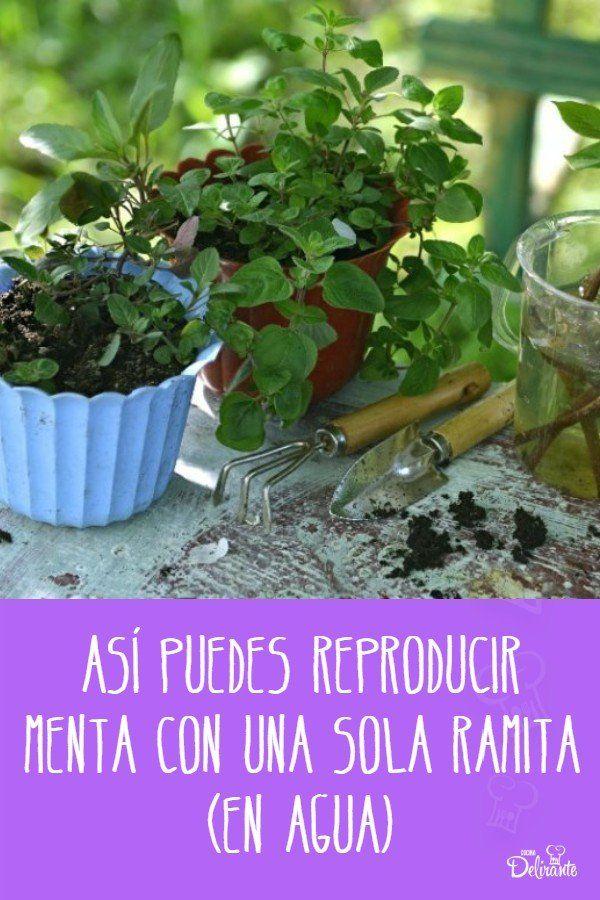 como reproducir menta Ramen, Planting, Fun, Growing Plants, Plant Stem, Plants, Hilarious