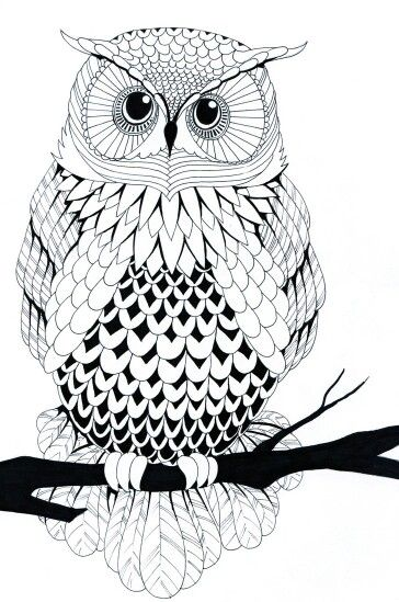 Owl line art. Very cool drawing!