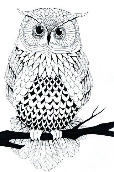 Owl line art.