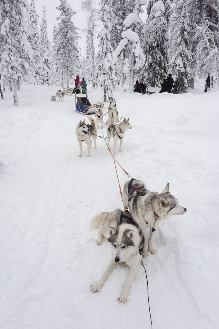 Visiting Finland in winter - a wonderful winter stay in Salla Finland, a beautiful village north of the Arctic Circle, with lots of things to see and fun winter activities. #thisisfinland #ourfinland #sallainthemiddleofnowhere