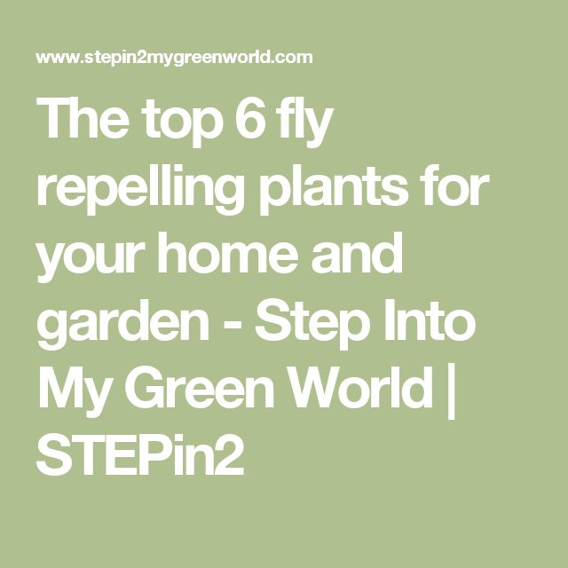 The top 6 fly repelling plants for your home and garden - Step Into My Green World | STEPin2