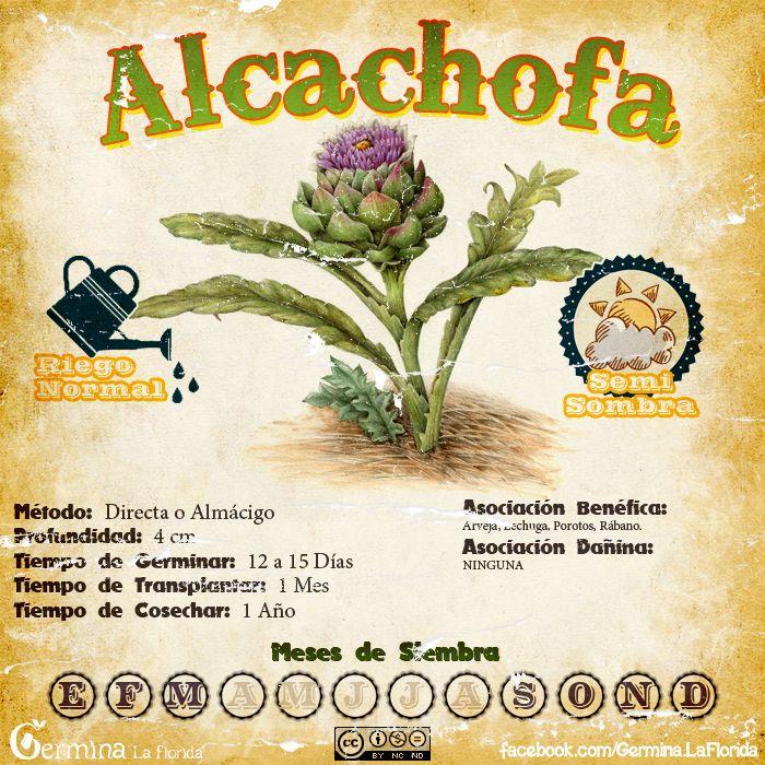 Alcachofa.jpg (700×700)