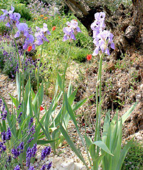 Irisar i blickfånget
