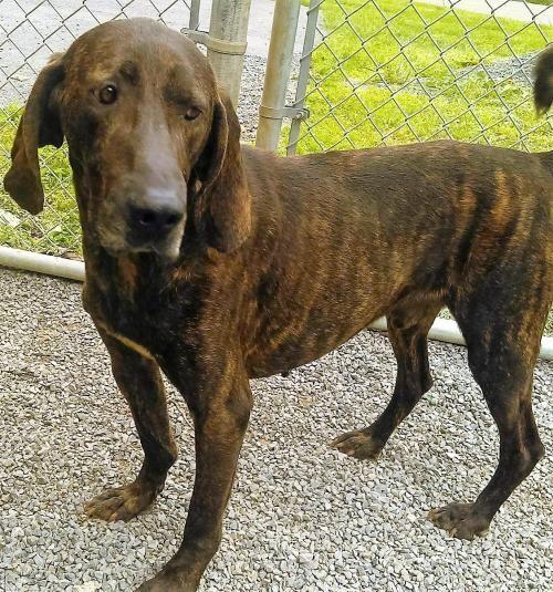 Dog Rescue Bedford
