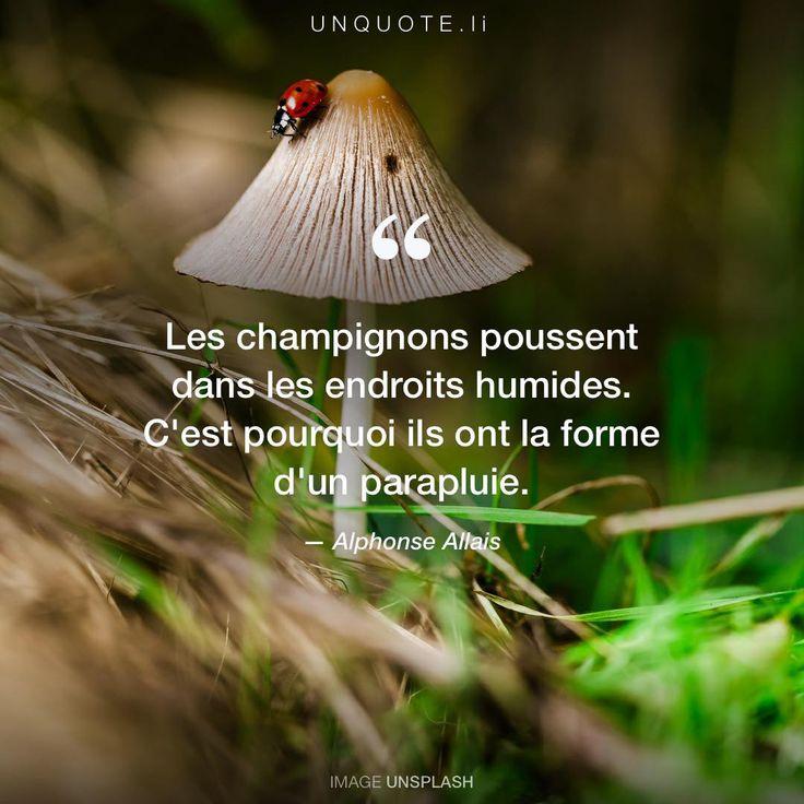 9 best C est l évidence images on Pinterest Proverbs quotes