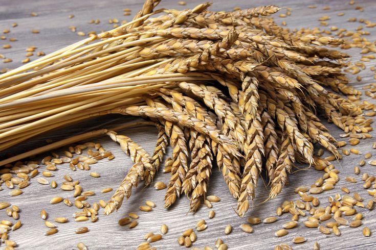 Dinkel, auch Spelz genannt, ist eine Getreideart, die ursprünglich im Südwesten Asiens angebaut wurde. Heute wird er auch in Europa kultiviert.