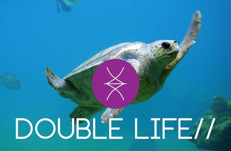 Introducing our new Tribes! Double Life Tribe// Choose your Tribe!  #DoubleLife #Turtle #DeepBlueSea #trimamuthtribe #design