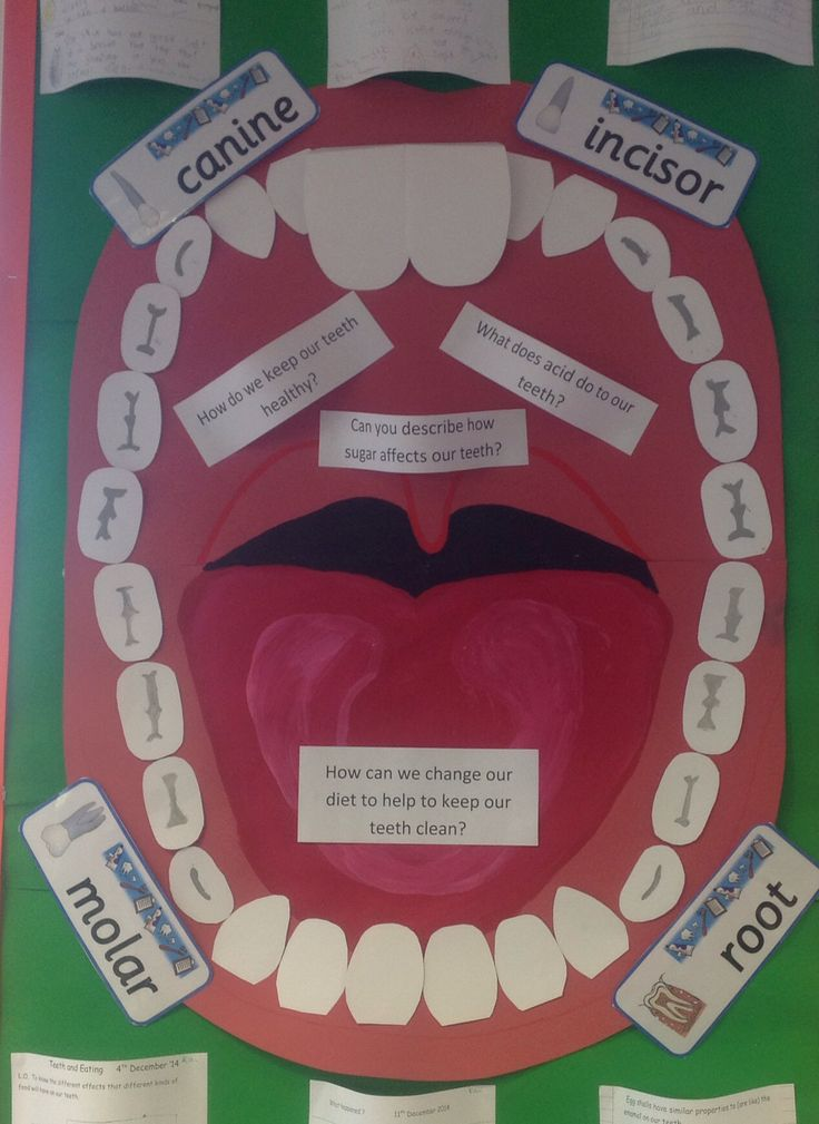 Classroom display, science, healthy eating, teeth.