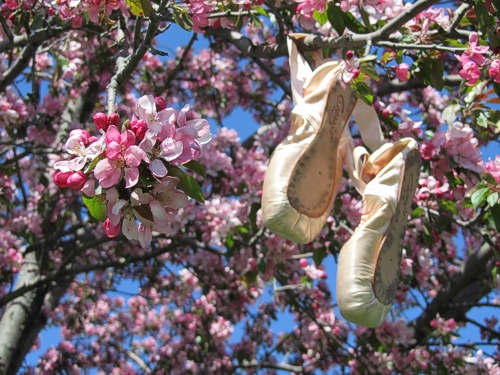 Pointe shoes dance with spring blossoms | photo Tatiana Dokuchic | post Mother's Day Dances #pink #blossoms #flowers #ballet #pointeshoes