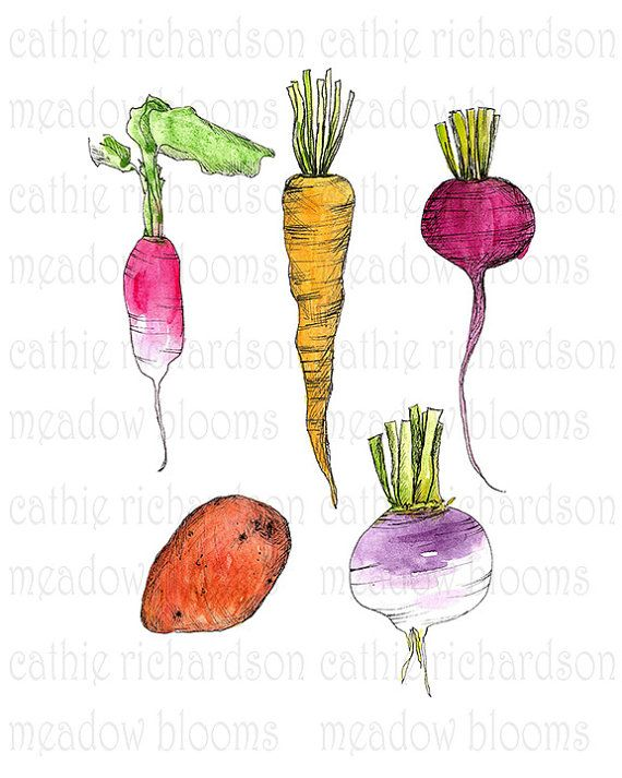 Best 25 Vegetable illustration ideas on Pinterest Food