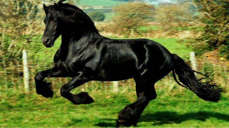 En este video podrás conocer las diez razas de caballos más exóticas y hermosas del mundo.