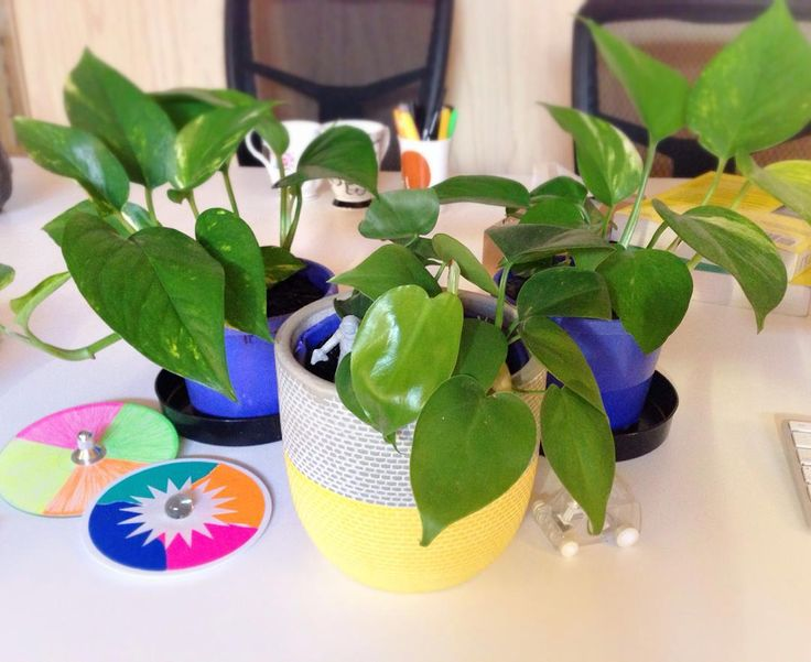 A big warm welcome to the three new leafy additions to Mosster's staff