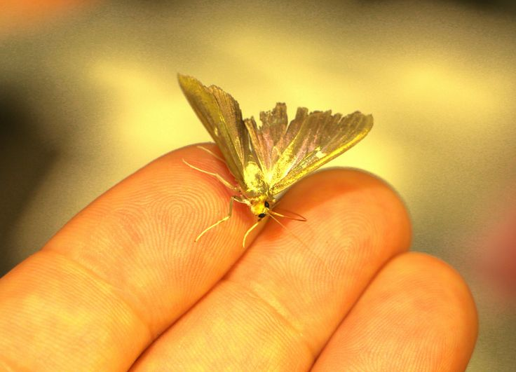 One day, I had a visitor. A golden, unexpected visitor. It was the first time in my life when a butterfly came and sit on me. I felt like I was blessed. It was a day I will always remember. And by luck, I had the camera at hand.