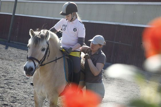 Horses at Equstom #minkki #Ratsastus