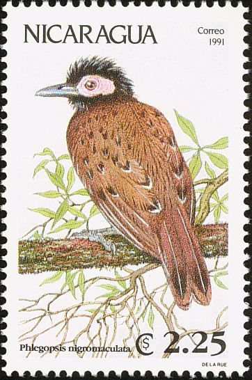 Black-spotted Bare-eye stamps - mainly images - gallery format