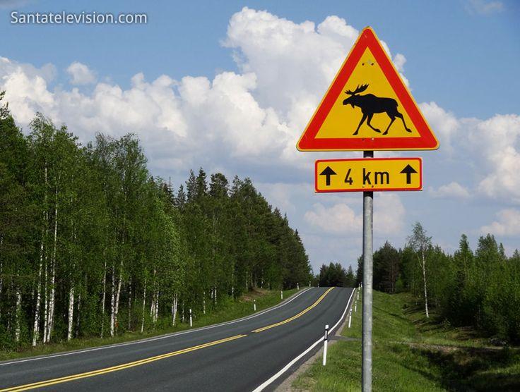 Elk crossing road sign in Lapland, Finland