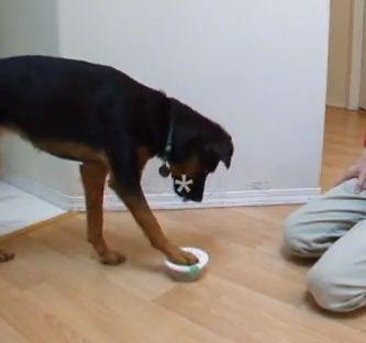 """Il gioco è un aspetto importantissimo nella crescita del cucciolo ma anche nella costruzione di un buon rapporto tra proprietario e cane adulto. In cinofilia il termine """"gioco"""" è piuttosto vasto, implica infatti anche delle attività educative che seppur fatte in modo divertente e piacevole risultano per il nostro cane a tutti gli effetti degli esercizi di lavoro."""