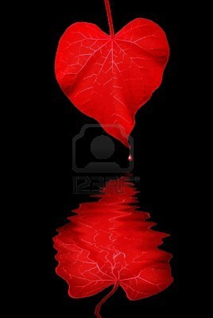 beautiful leaf heart and reflection