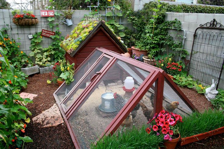 This gorgeous micro-urban homestead belongs to Theresa Loe, producer for the gardening show, Growing a Greener World TV. She crams so much life into her small, urban Los Angeles yard. Do you love it?