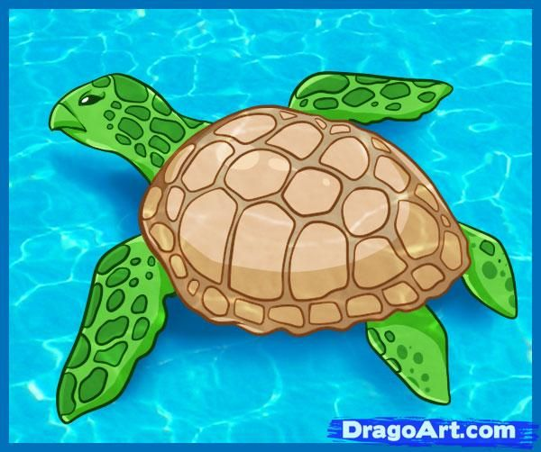 43 best Darwin Day images on Pinterest Sea turtles Sea turtle