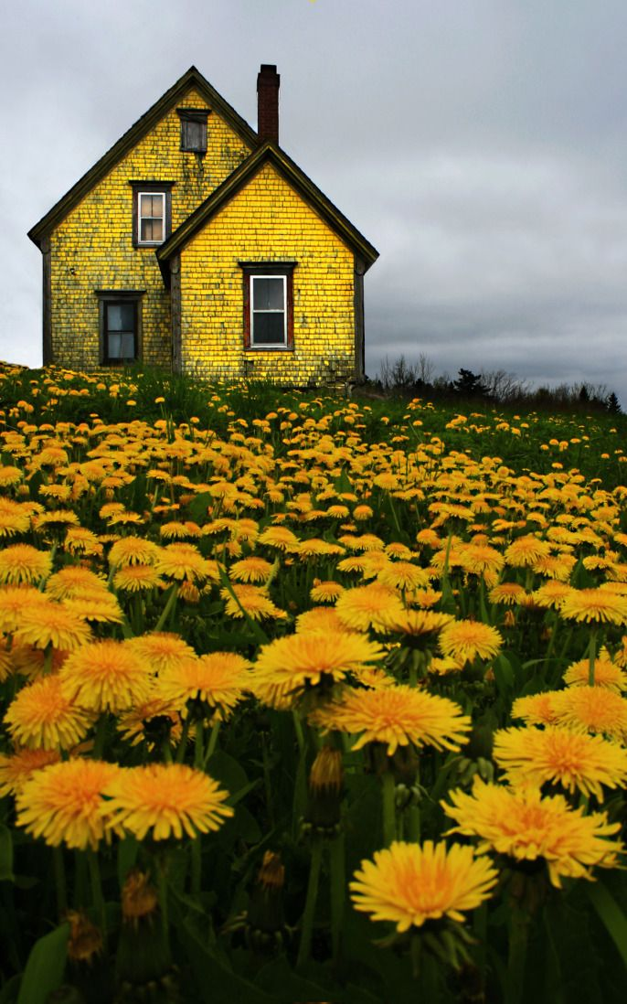 yellow house, flowers