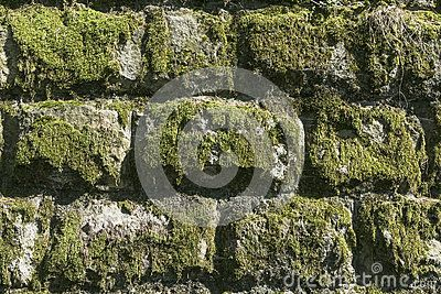 Old stones wall  in village Roznow in Malopolska . Poland . Europe.