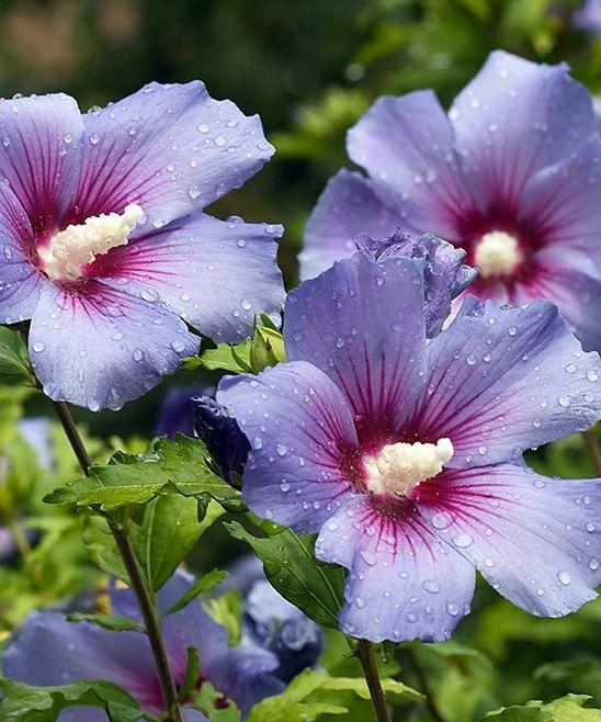 Portfolio Blommor Blommor Tr 228 Dg 229 Rd Och V 228 Xter